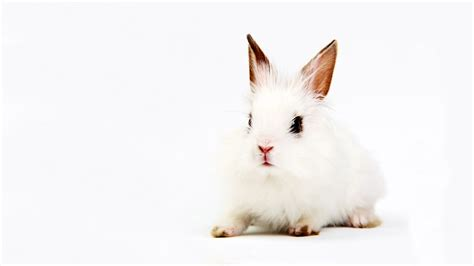 cute rabbit hd wallpaper wallpaper cute rabbit wallpaper