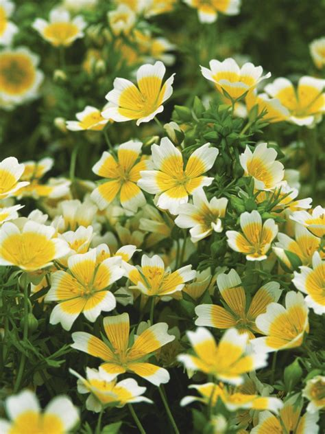plants for rock gardens the best plants for rock gardens plants for rocky soil