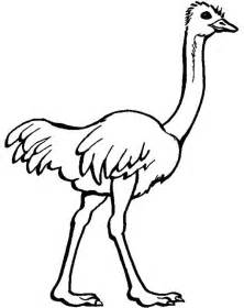 ostrich coloring pages printable