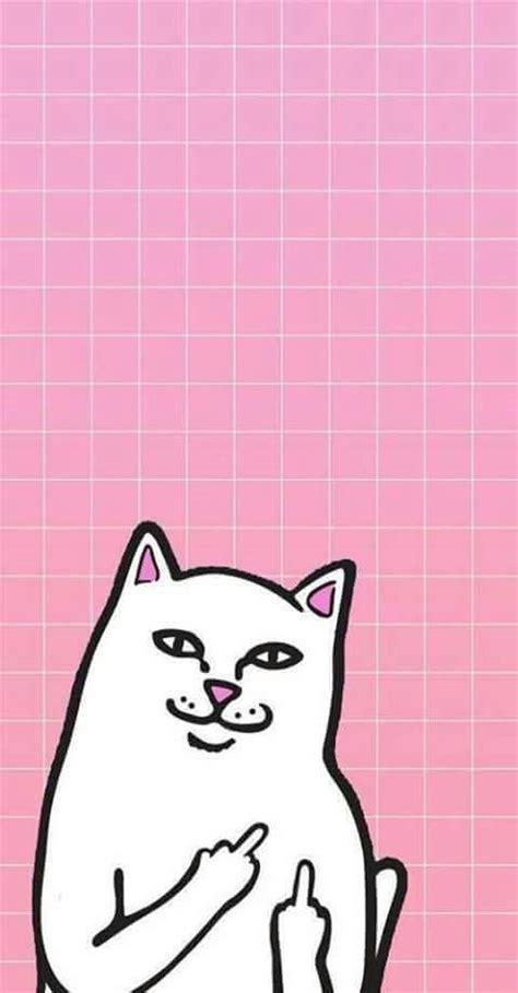 Preloved Cat Kucing Pink Sweater imagen de wallpaper cat and pink w a l l p a p e r s we it and i