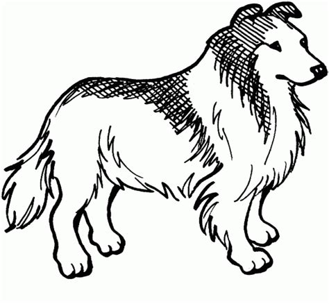 animal coloring pages for kids collie