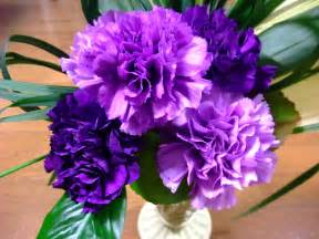 corsage colors file moondust carnation jpg
