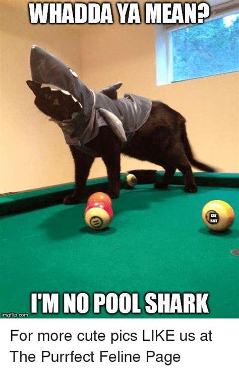 Pool Meme - 25 best memes about pool shark pool shark memes