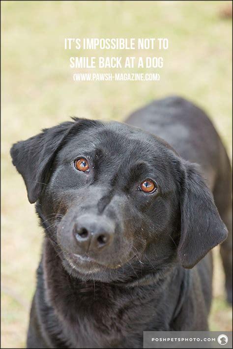 toronto dog photographer inspiring dog quotes pawsh magazine