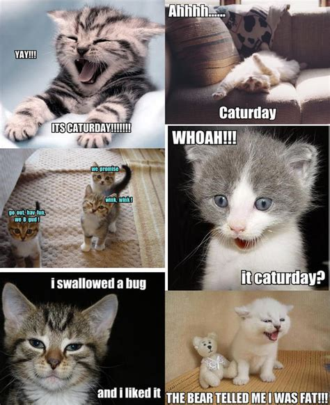 Kitten Meme - dog memes memes and cat memes on pinterest