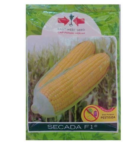 Benih Jagung Manis Secada benih jagung secada f1 200 gram panah merah bibitbunga