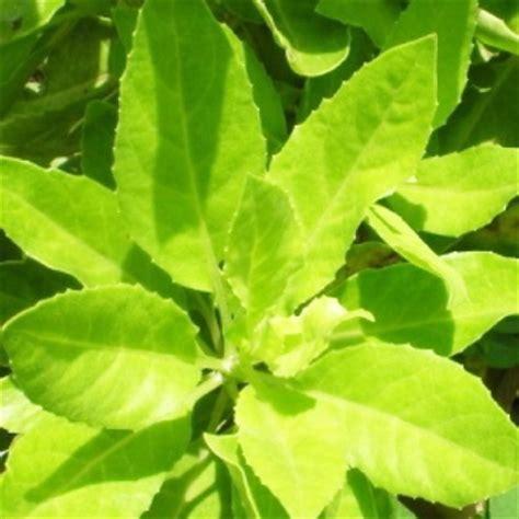 jenis tanaman obat lengkap  gambar kandungan