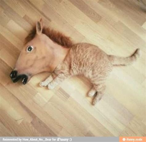 half half cat half half cat cats cats and horses
