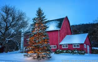 lights connecticut iconic barn tree with lights winter