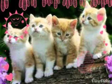 imagenes tiernas de ositos con frases imagenes de gatitos tiernos youtube