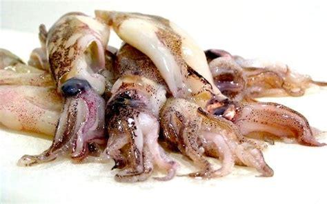 come cucinare calamari come cucinare i calamari dissapore