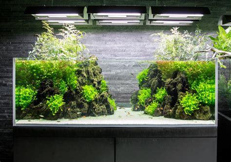 plantados acuaticos plantar ideas paisajismo acuatico