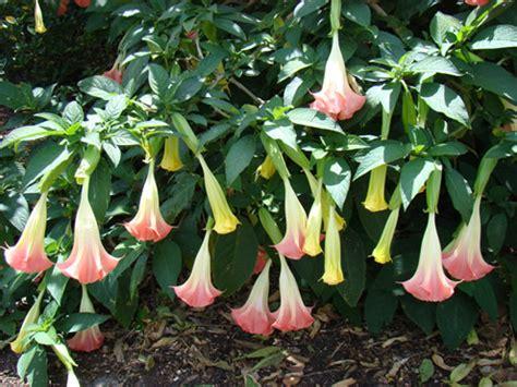heat tolerant crops heat tolerant plants keeping gardens alive