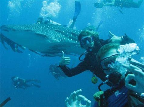 dive koh tao whale sharks koh tao roctopus dive koh tao