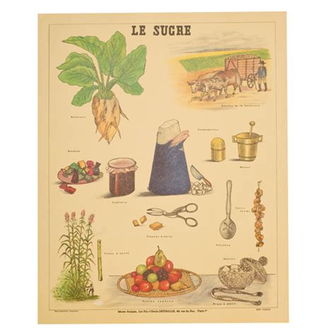 Home Design Decor Shopping Wish by Deyrolle Le Sucre Sugar Poster Print Unique Amp Unity