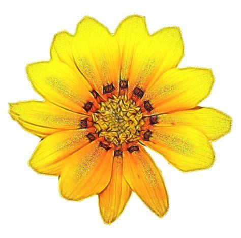 imagenes de flores ilustradas cosas para photoscape im 193 genes para photoscape photoshop