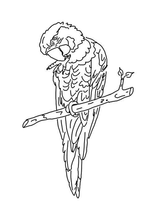 Parrot Coloring Pages Coloringpagesabc Com Parrot Coloring Pages