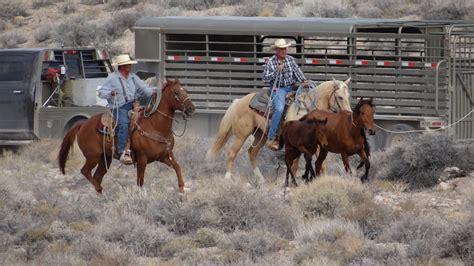 blm mustang roundup horses american spirit or american heartache gohunt
