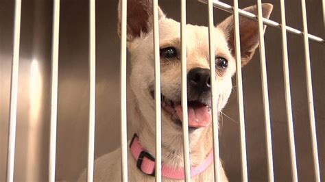 puppy adoption jacksonville free pet adoptions this weekend due to animal shelter