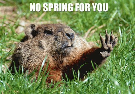 groundhog day jokes no for you