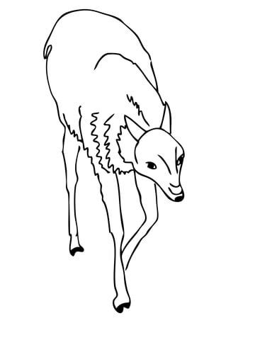 spectacled bear coloring page guanaco andean camelid coloring page new spectacled bear
