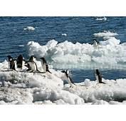 Faune Antarctique  Baleines Manchots Et Oiseaux Marins