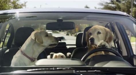 suburu hair salon dog 2014 super bowl ads wisdom of the puppies reading the