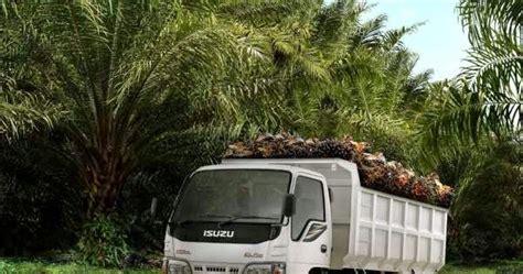 Faktor Yang Mempengaruhi Minyak Kelapa Sawit membangun kebun kelapa sawit transport dan traksi