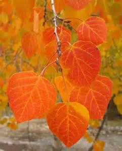 fall colors photos fall foliage images in colorado