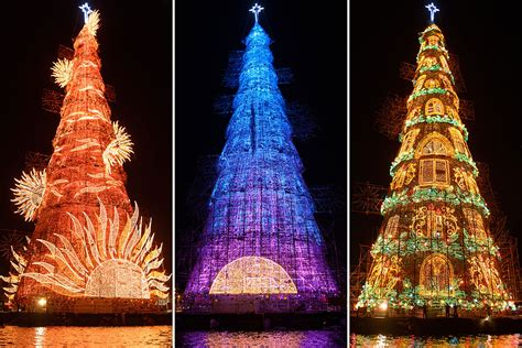 tallest xmas teee in tge workf photos of the day stegosaurus typhoon hagupit world s tallest tree