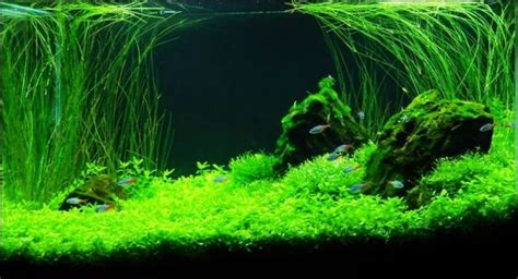 hair grass aquascape size of tank 15g filtration jebo 501 hob filter