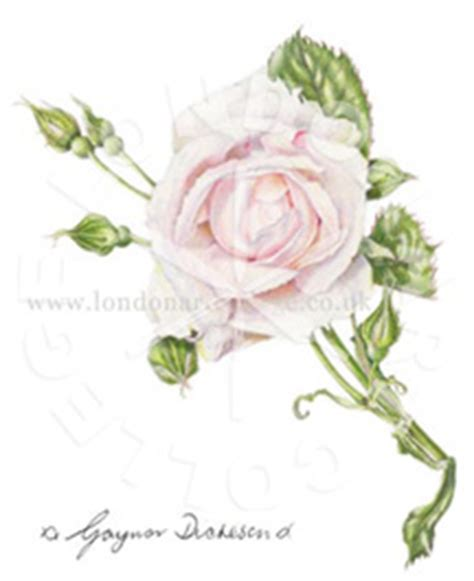 botanical drawing in color 0823007065 botanical coloured pencil online art course london art college