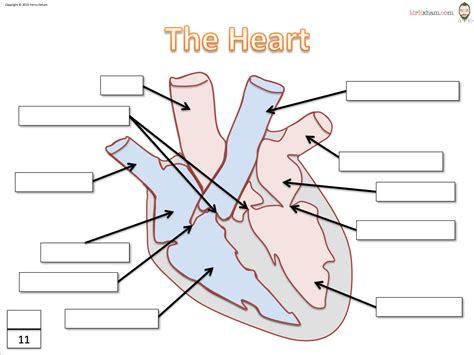 diagram blank fill in the blank diagram anatomy human