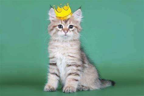 imagenes cool de gatos d 237 a del gato nueve v 237 deos m 237 ticos para celebrar el d 237 a