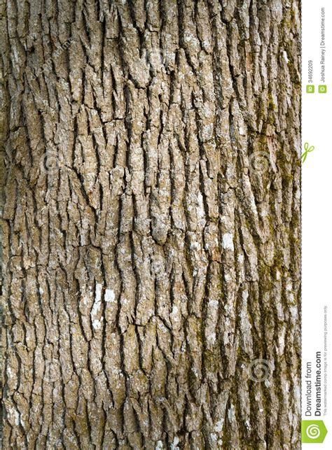bark color tree bark abstract stock image image of abstract woods
