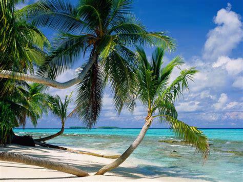 v 237 zim 225 d 243 k tepuka island tuvalu k 233 p