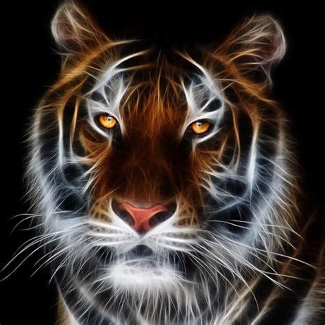 gambar wallpaper gambar harimau  kampung hewan beli