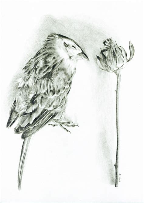 yellow hammer coloring page how to draw yellowhammer
