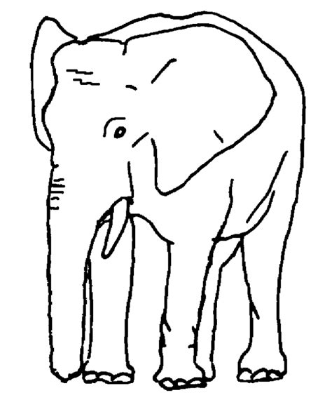 coloring page for elephant african and indian elephants coloring page elephant
