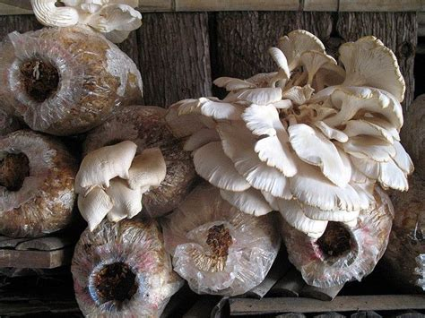 75 best images about mushrooms on