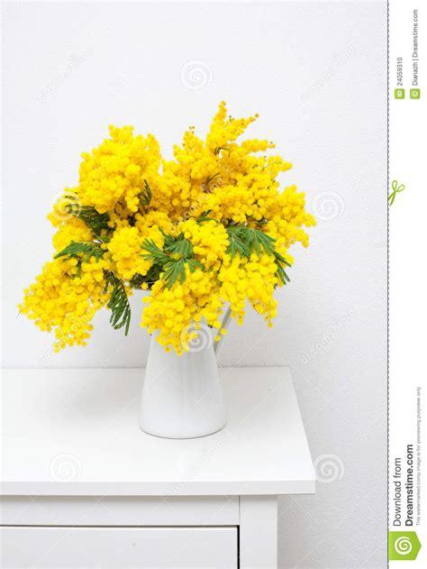 mimosa in vaso mimosa in un vaso bianco sulla tabella fotografia