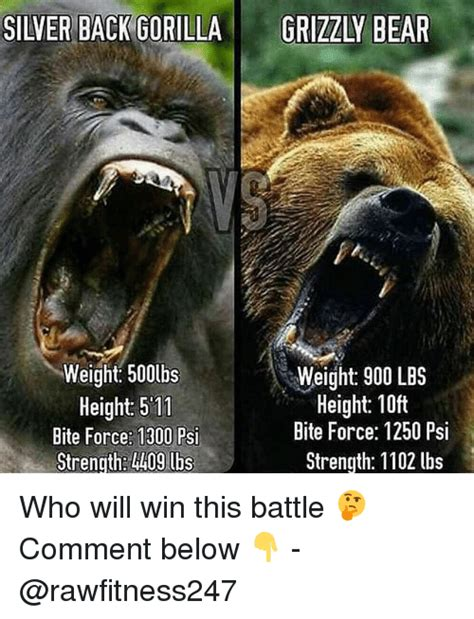 Shaved Bear Meme - 25 best memes about grizzly bear grizzly bear memes