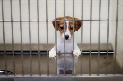 animal rights images poor animalsstop hurting them