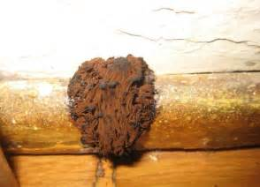 brown mould in bathroom brown mold facts appearance risks and how to remove it