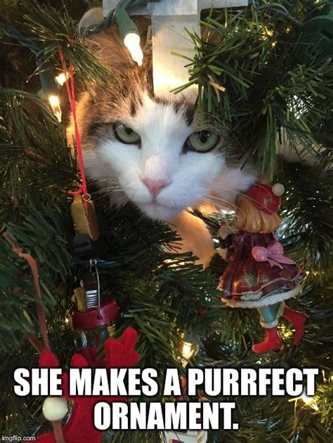 Cat Christmas Tree Meme - christmas tree cat imgflip