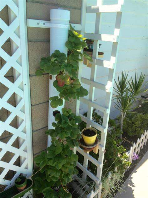 pvc pipe strawberry tower gardenorg