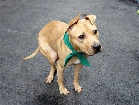 disabled dogs for adoption 17 best images about adoption board for disabled dogs and cats on theater