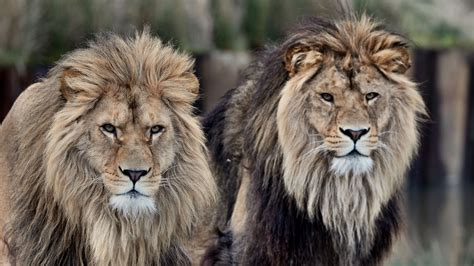 the deep south ruud leeuw de leeuwen uit de beekse bergen diruam producties