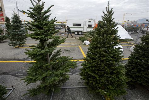 northwest tree shortage leads to christmas conundrum in