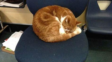 Punya Ke Punya sering ke sekolah kucing ini punya kartu pelajar